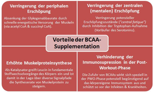 Effizientes Timing von BCAAs und purem Leucin