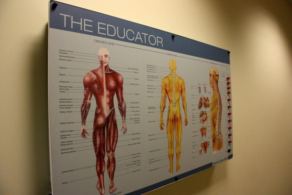 Chiropraktik im Bodybuilding - Funktionelle Unterstützung zur Trainingsoptimierung