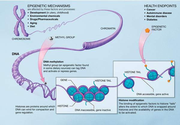 Intermittent Fasting: Stress, Lebensqualität & Epigenetik