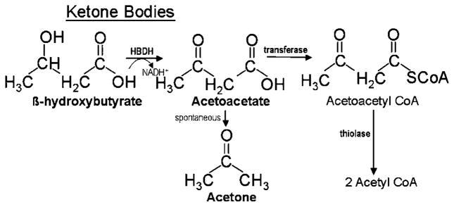Die chemische Struktur der drei Ketonkörperarten: Aceton (Ac), Acetoacetat (AcAc) und β-hydroxybutyrate (βOHB). Als acetyl CoA finden sie ihre Wege in den Citrat-Zyklus. (Quelle: Pins (2008) [65]