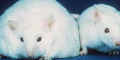 Leptin: Stoffwechselsteuerung & Schlankheit