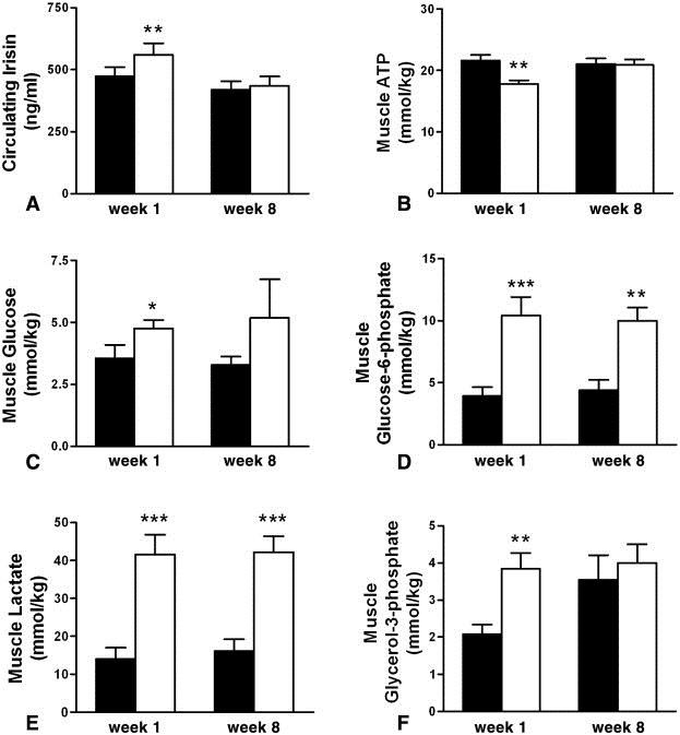 Während die IRISIN-Level per sé recht konstant blieben (420.3±32.7 vs 435.1 ±38.5, p=0.5; hängt das evtl. mit der nicht signifikant erhöhten Muskelmasse zusammen?), fanden sich geringe Verbesserungen hinsichtlich des ATP-Abbaus im Muskel sowie von Glukose und Glycerol-3-Phosphat.