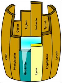 Proteinpulver: Ein Guide zum Überblick - Whey, Casein & Co.