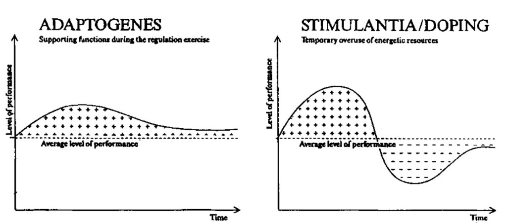 Rhodiola Rosea (Rosenwurz) – Adaptogen & Stresskiller