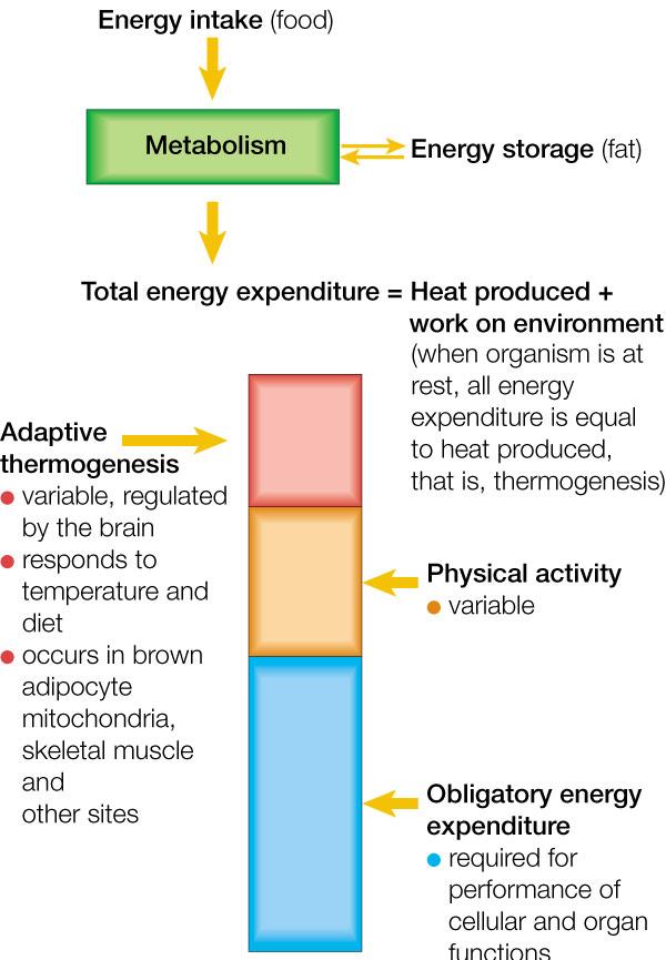 Energieverbrauch_Nature_AesirSports