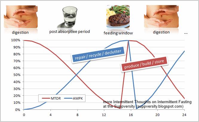 Der AMPK-Signalpfad ist mit der LPL-Aktivität korreliert. Bereits in einem früheren Installment hat Doc Andro die Auswirkungen einer IF-Ernährungsweise und den AMPK-Level beleuchtet. Den Artikel finet ihr hier.