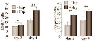 Forscher aus Korea konnten in einer ihrer Untersuchungen das anabole Potenzial von Hesperidin, einem Flavonoid, welches sich überwiegend in Zitrusfrüchten findet, herausarbeiten.