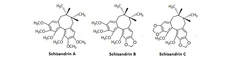 Der potente Wirkstoff der Schisandrapflanze,