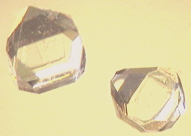 Xylitol-Kristalle unterm Mikroskop.