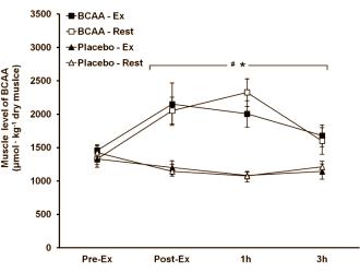 Die Supplementation mit BCAAs erhöht die BCAA-Konzentration in der Muskulatur (Bildquelle: Ergo-Log)