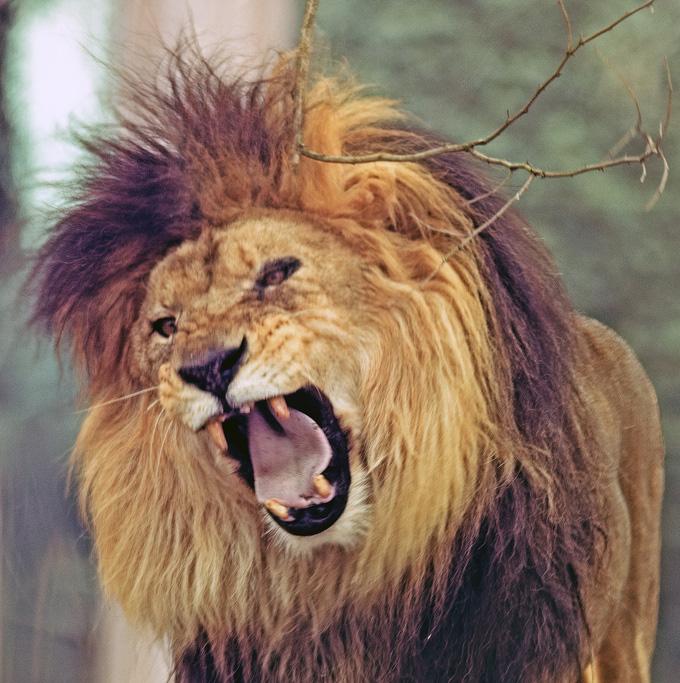 Ein Löwe in Eisen: Kraft kennt keine Geschlechter