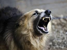 Seid ihr bereit zum Mountain Dog zu werden?! (Bildquelle: Flickr / ; CC Lizenz)