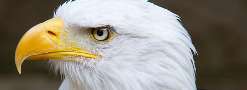 Aquila non captat muscas – Ein Adler fängt keine Fliegen