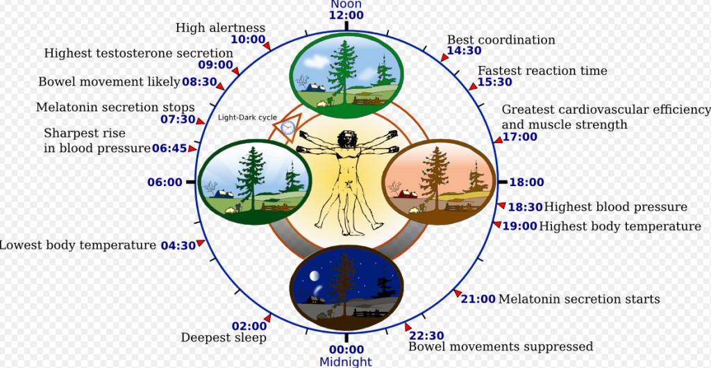 Der menschliche Biorhythmus wird selbst heute nur unvollständig verstanden