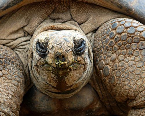 Wappentier der Progressivität: Die Schildkröte
