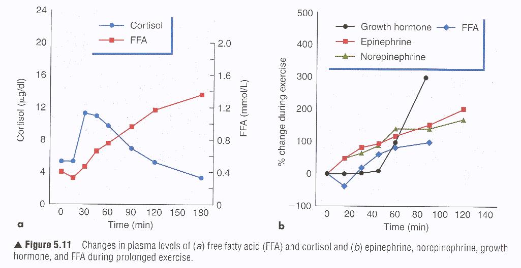 Die Auswirkungen von Kraftsport auf den körpereigenen Hormoncocktail sind (un)mittelbar sehr mannigfaltig; klar ist, dass ein regelmäßiges Kraftprogramm bei der Optimierung der Hormonspiegel behilflich ist, allen voran durch eine Stimulation von lokalen Wachstumsfaktoren und von GH - dem Anti-Aging Wachstumshormon. (Bildquelle: Health Correlator)