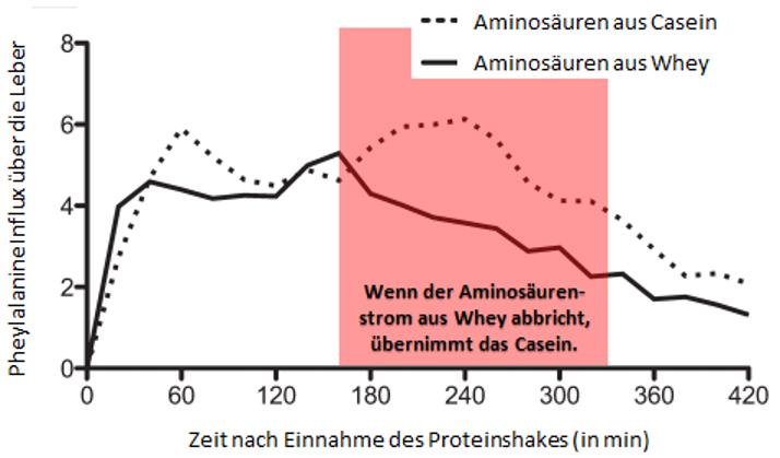 Abb. 3: Die Daten, die Soop et al. im Rahmen einer Studie mit Whey und Mzellarem Casein gesammelt haben belegen, dass die Freisetzung von Aminosäuren aus Casein genau dann ihren Höhepunkt erreicht, wenn die Aminosäuren aus dem Whey Protein mehr oder weniger aufgebraucht sind [9].