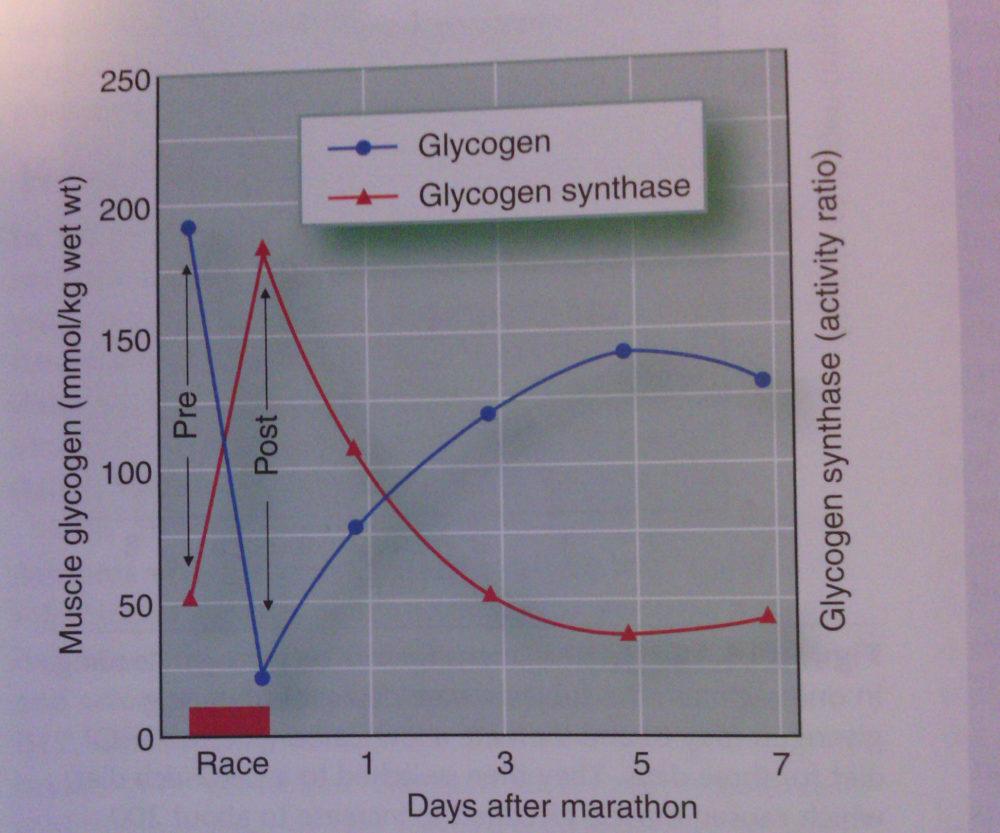 Glykgoen-Resynthese-Dauer