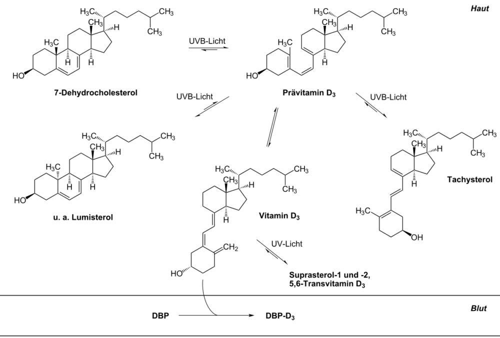 Vitamin D: Für mehr Leistung, bessere Regeneration und ein starkes Immunsystem