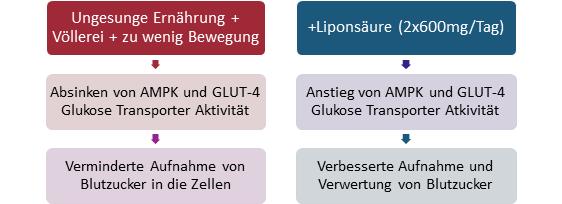 Abb. 11: Liponsäure aka alpha lipoic acid wirkt im Prinzip genauso wie das Diabetes Medi-kament Metformin (Glucophage), das nach wie vor als eine der besten Behandlungsoptio-nen für nicht-insulinabhängige Diabetiker gilt.