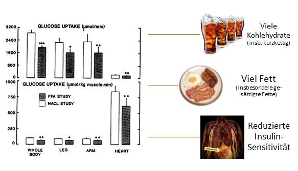 Abb. 3: Die Grafik links oben, die aus einer Studie von Nuutila et al. (1992) stammt, zeigt, wie erhöhte Mengen von Fett in der Blutbahn (FFA) die Blutzuckeraufnahme im ganzen Körper, insbesondere aber in der Muskulatur behindern.