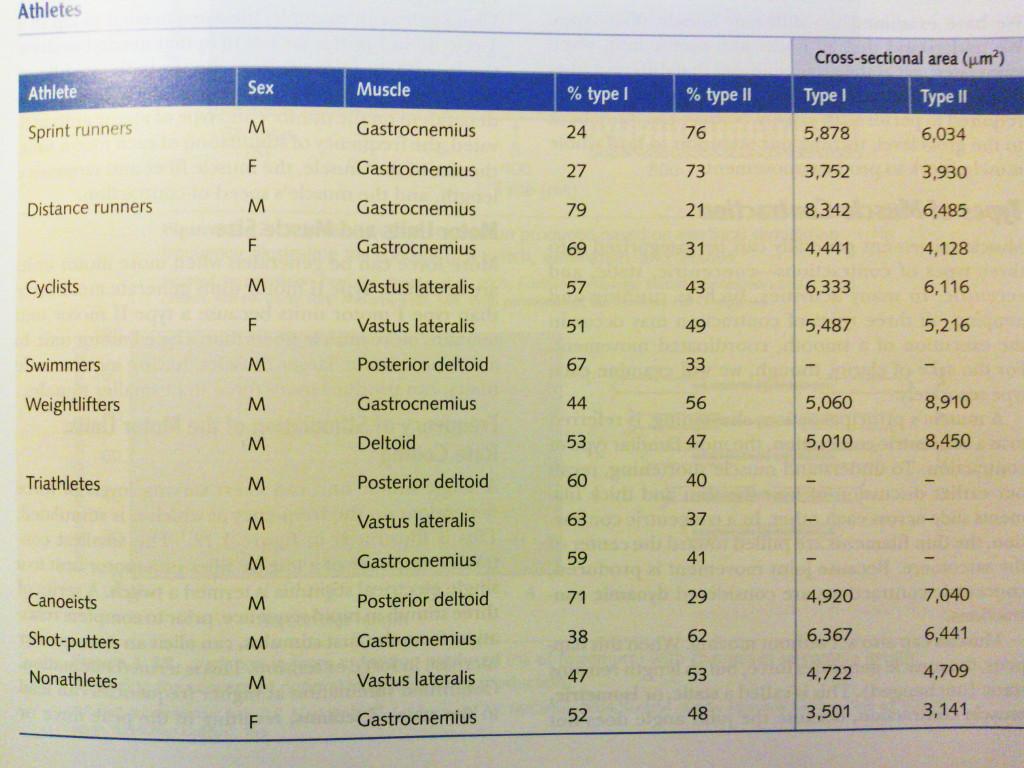 Muskelfaserverteilung in % sowie entsprechende Querschnittsgrößen in männlichen und weiblichen Athleten unterschiedlicher Sportbereiche (Bildquelle: (Bildquelle: Wilmore / Costill / Kenney (2008): Physiology of Sports & Exercise. 4. Ausgabe. Human Kinetics.)