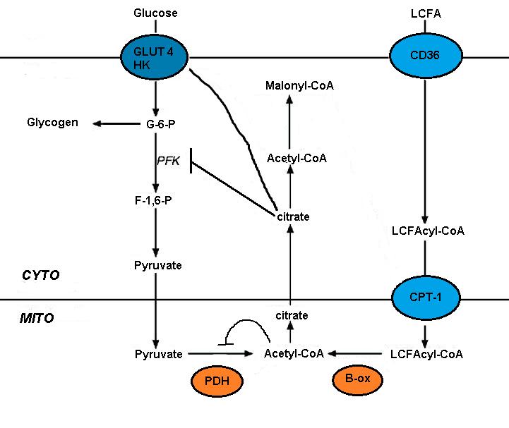 (Bildquelle: Wikimedia.org / MetabolicElizabeth ; Public Domain Lizenz)