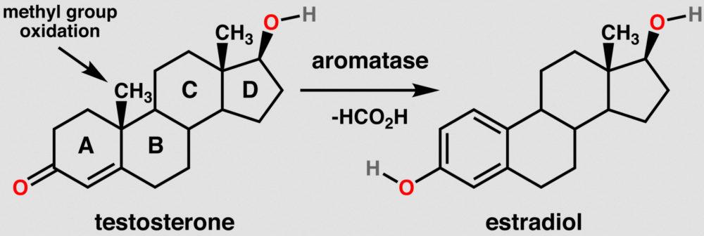 Astaxanthin und Saw Palmetto erhöhen Testosteronspiegel