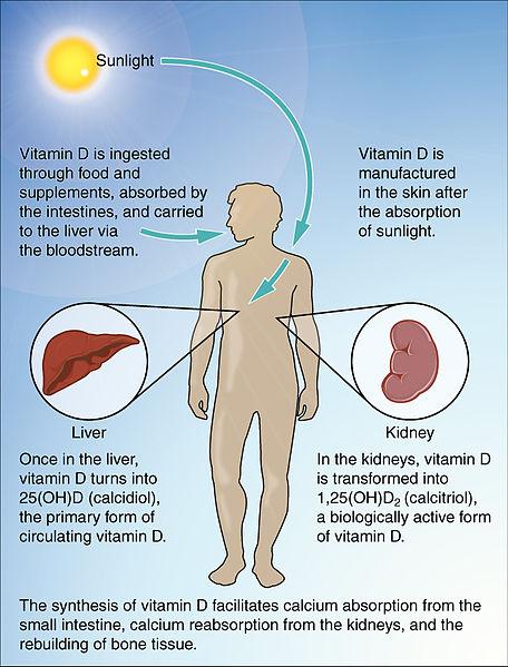 Vitamin D für eine anabole Signalwirkung und mehr Muskelaufbau