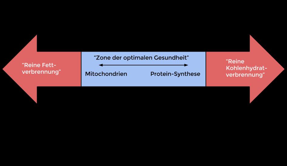 Das Leben in Zyklen ist charakterisiert durch zwei hervorgehobene Signalpfade: Den des strukturellen Aufbaus (mTOR) und dem des Abbaus (AMPk) (Bildquelle: Das Handbuch zu Ihrem Körper, 2014)