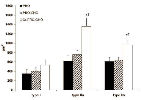 Eine anabole Kombination: Über die Symbiose von Whey, Creatin und Glukose