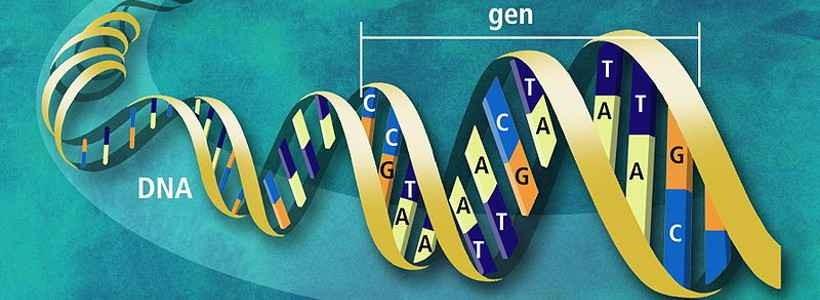 Epigenetik (nicht nur) für Athleten