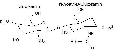 Die Chitosan-Strukturformel