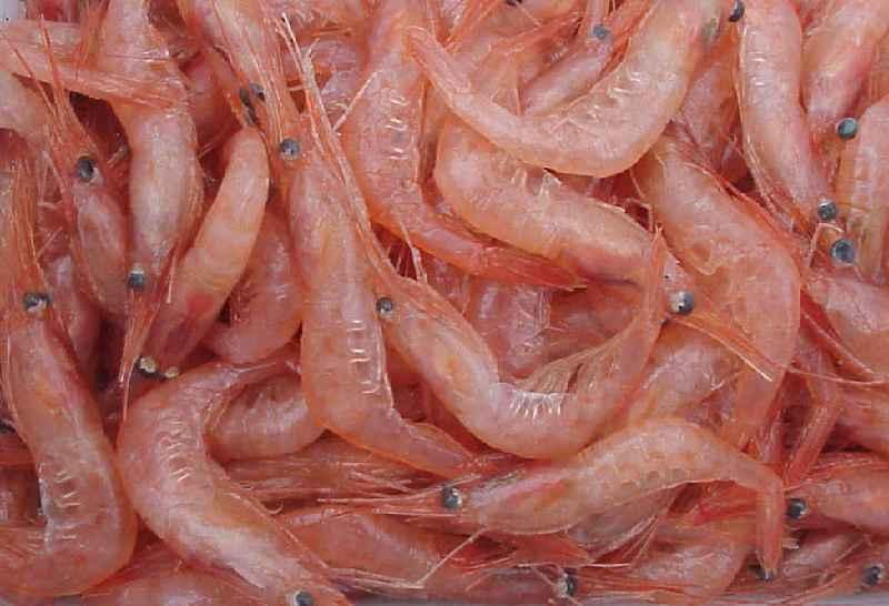Chitosan-Rohstoff: Das Chitin. Die meisten dürften es vom Exoskelett bei Insekten kennen. Bei Chitosan werden eher Schalentiere verwendet, um das begehrte Chitin zu bekommen