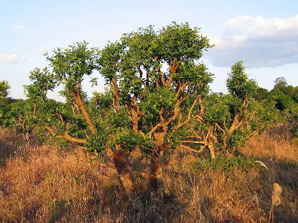 (Bildquelle: Wikimedia.org ; GNU Free)