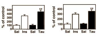 Taurin und Glukoseaufnahme in Muskeln und Leber