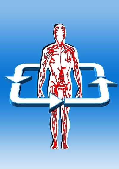 Schröpfen und Blutzirkulation