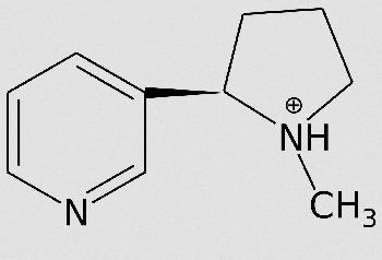 Chemische Struktur Nikotin