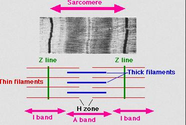 (Bildquelle: Wikimedia.org / Sameerb ;CC Lizenz)