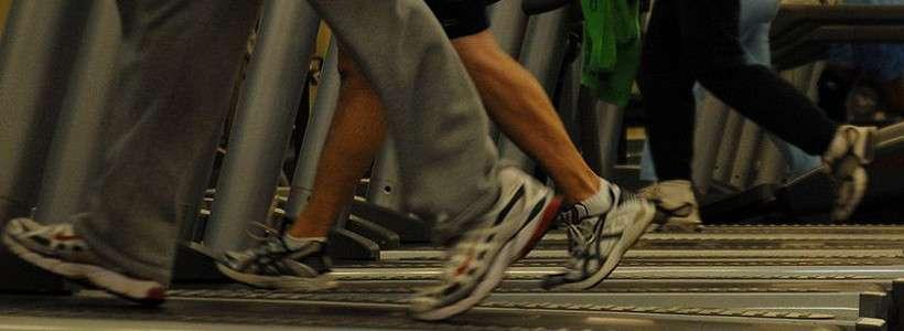 Yerba Mate Exktrakt erhöht Fettverbrennung und Energieverbrauch beim Training