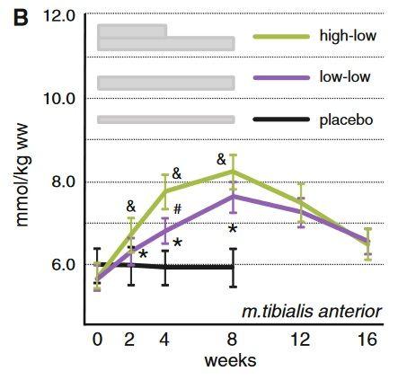 Beta-Alanin Einnahme: Effektive Ladeprotokolle zur Steigerung des Carnosinspiegels