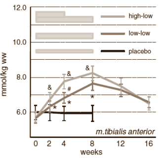 Erhöhung des Carnosinspiegel in der vorderen Schienbeinmuskulatur (Tibialis anterior) nach 8-wöchiger Beta-Alanin Supplementation (3,2g & 1,6g) sowie Placebo. (Bildquelle: Ergo-Log / Stellingwerf et al. (2012))