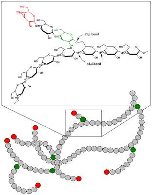 Glykogen: Nichts anderes als polymerisierter Zucker (Glukose-Kette) (Bildquelle: Wikimedia / Maksim ; CC Lizenz)