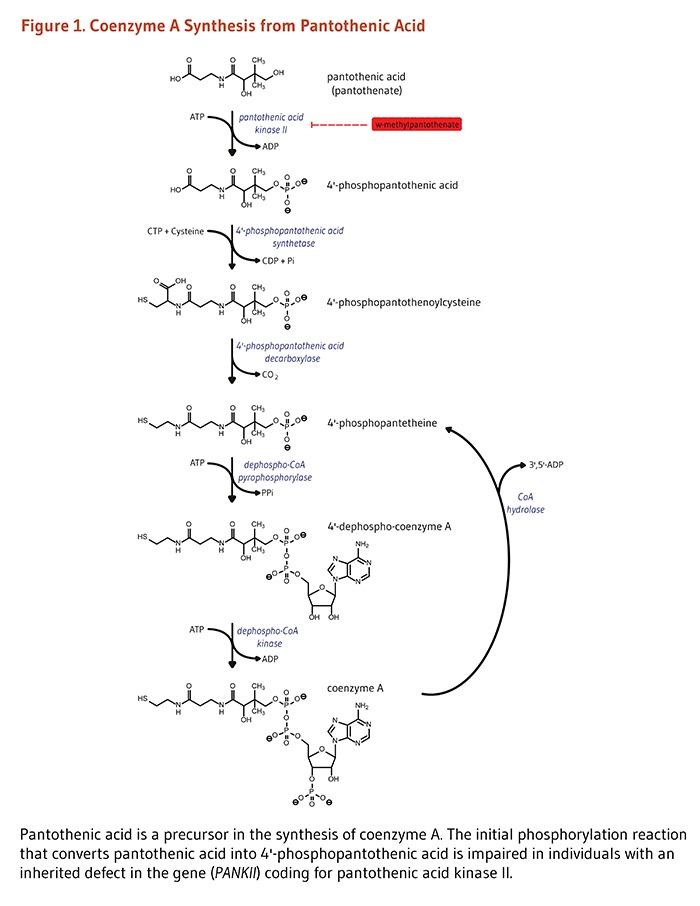Von der Pantothensäure zu Co-Enzym A(Bildquelle: [54])