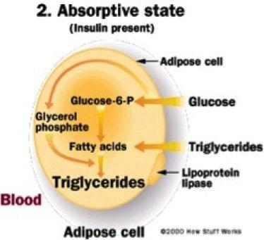 Insulin: Der Schaffner des metabolischen Zuges