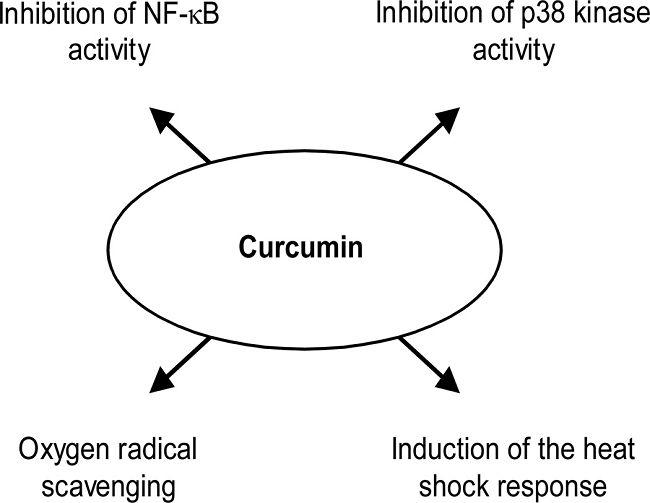 Studie: Kurkuma (Curcumin) wirkt anti-katabol | Studien Review
