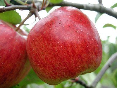 Superfoods: Äpfel, Kirschen und grünes Gemüse – Eine Tour durch heimische Obst- und Gemüsegärten