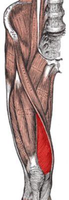 Knieprobleme & Kniegesundheit: Ursachen, Vorbeugung & Training