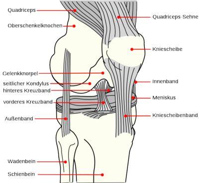 Knieproblem #1: Riss des vorderen Kreuzbandes