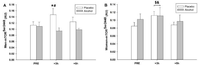 Alkohol hemmt Proteinsynthese (mTOR) bei Männern, jedoch nicht in Frauen | Studien Review